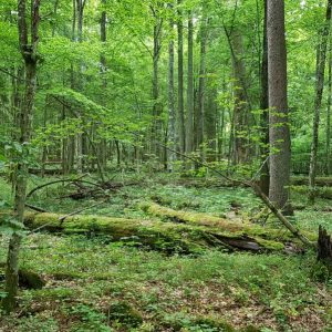 Białowieża forest – in search of the scientific evidence (and why it is still worth meeting and discussing)