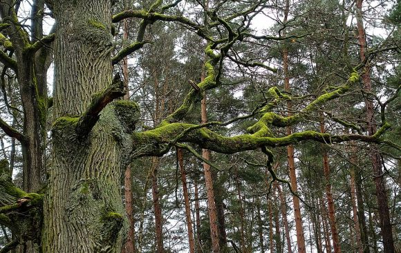 Comprehensive publication on integrated forest management in Europe online available now