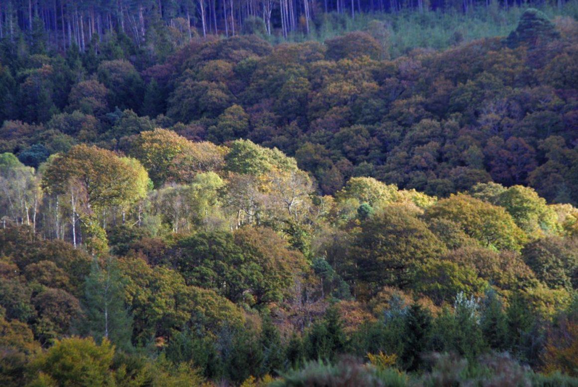 Afforestation in Ireland – increasing trends in broadleaved establishment