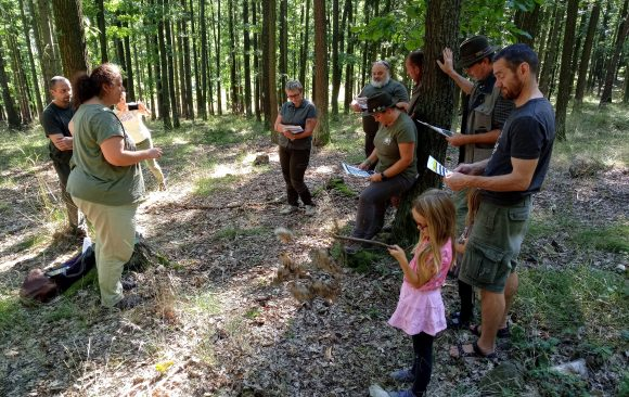 Secondary forestry schools collaborating with Marteloscopes in the Czech Republic