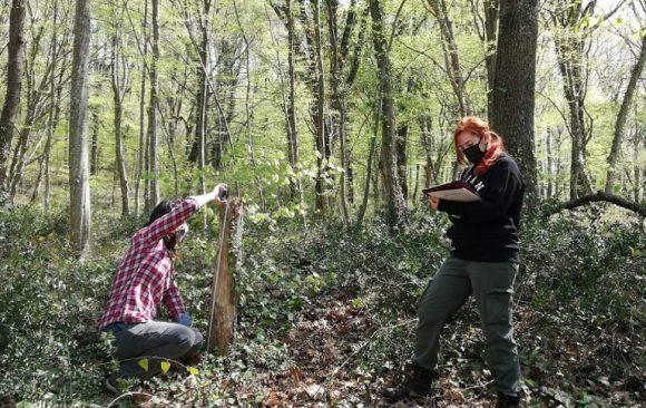 First study on tree microhabitats using Marteloscope methodology in Turkey
