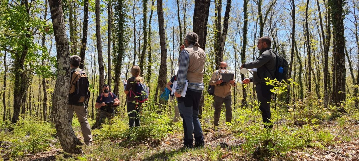 More than 200 forest stakeholders trained in Italian marteloscope