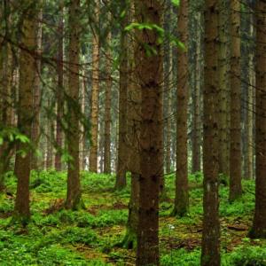 Celebrating Biodiversity Governance in Slovenia