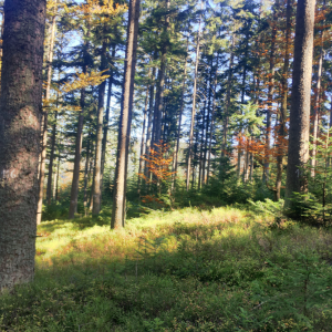 Learn, exchange, decide – with a variety of demonstration objects of forest management in the Czech Republic