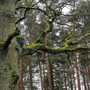 Protecting old-growth forests in Europe – new study out now