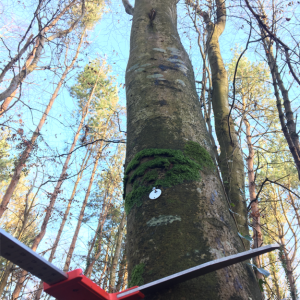 Combining silviculture and ecology to benefit our forests – the Irish way
