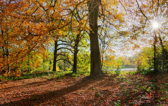 Managing England's woodlands in a climate emergency – a guide to implement adaptation actions